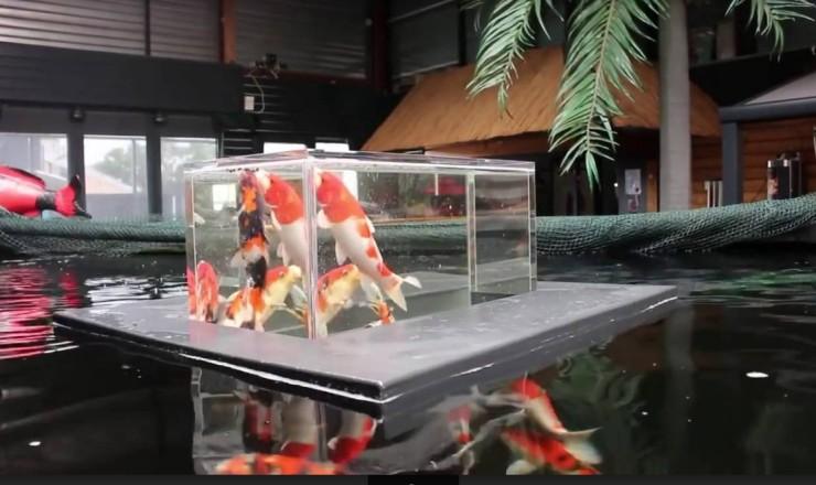 sự độc đáo của bể cá úp ngược khiến ai cũng cảm thấy bất ngờ